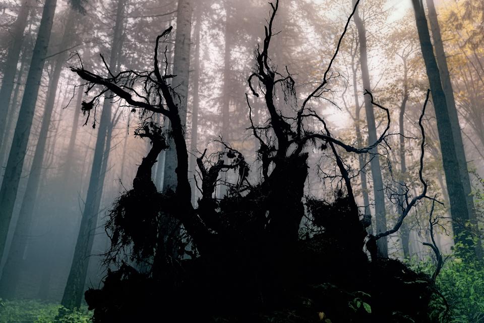 Foto n° 14 –quarta class IL BACCHINO CLAUDIO MARCHI Le foreste sono luoghi incantati, ma a volte possono nascondere pericoli reali oppure frutto della fantasia. L'Hilofobia è paura persistente, anche anormale e ingiustificata dei boschi. La buona fotograf
