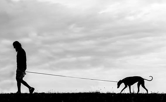 QUINTA ClassA  Foto n° 17 – IDEAVISIVA ANTONELLO FANTACCINI L'uomo col suo cane, tutto in un controluce sereno ben fotografato, una passeggiata raccontata in uno scatto. La ripresa fatta dal basso esalta i due elementi che sembrano incedere con la stessa