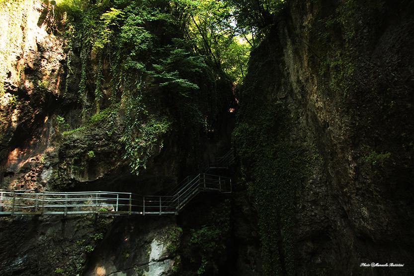 Canyon Rio sass