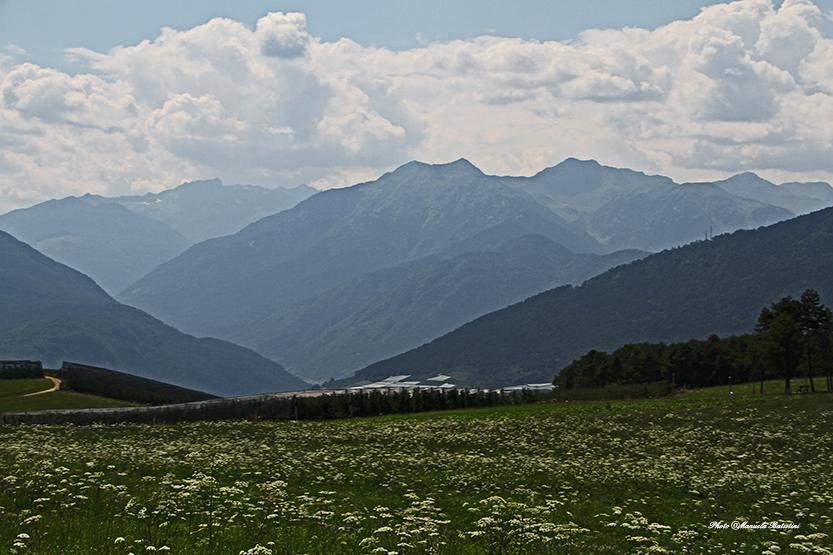 Prati in fiore con lo sfondo delle dolomiti del Brenta