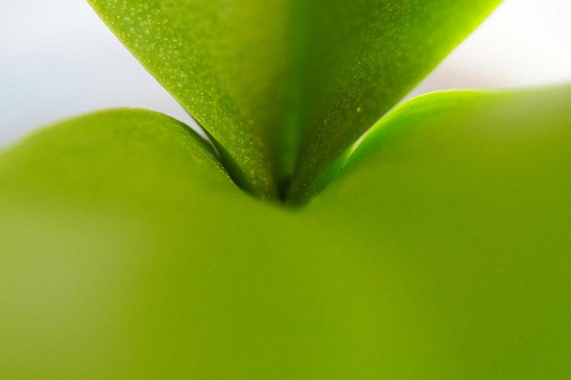 7      mariotti alesse e con una bella idea di microfotografiaandro Fortemente verd